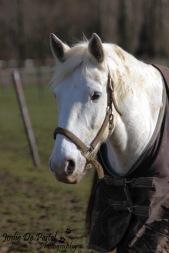 Leach, de springer van stal die ook nog aardig wat dressuur kan!